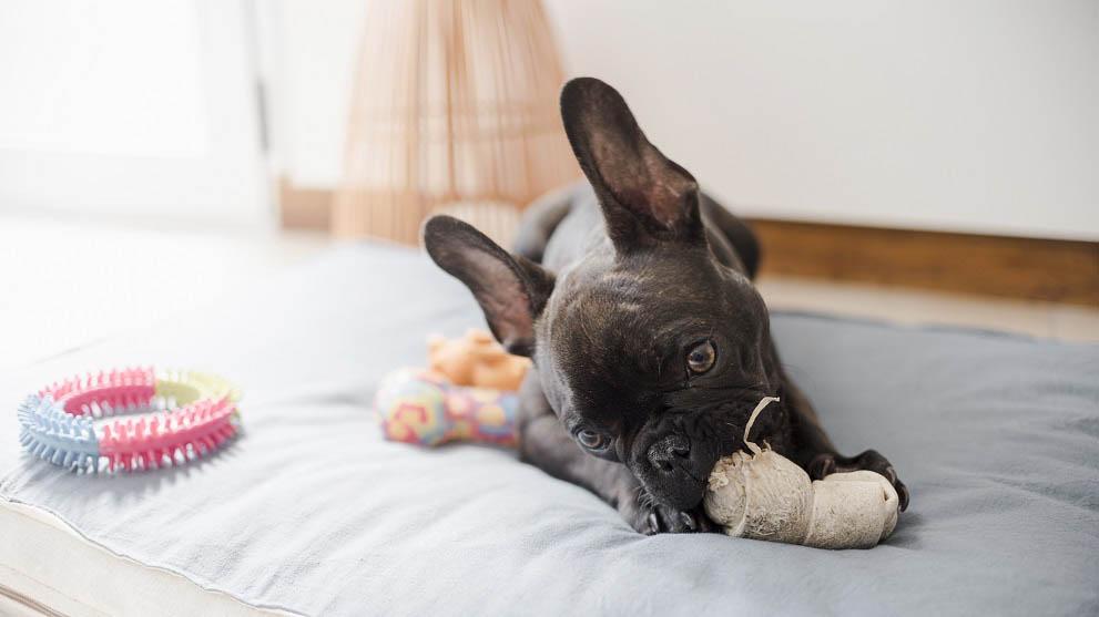 juguetes para perros - ¿Los perros pueden ser veganos?