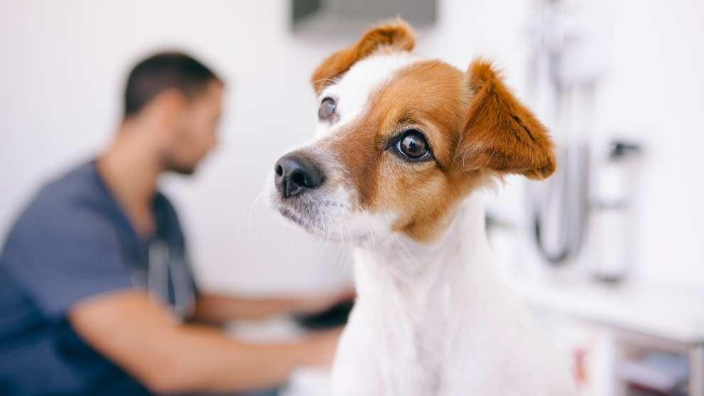 leishmaniasis perros - 6 juegos para divertirte con tu perro durante el confinamiento