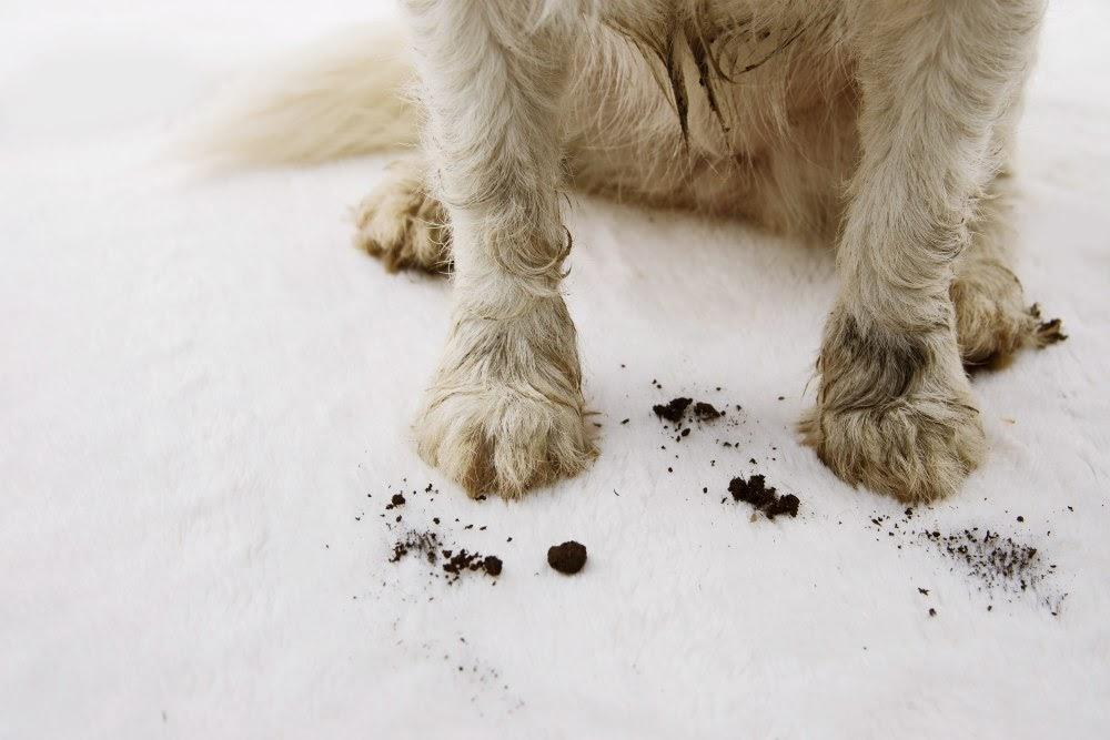limpiar patas perro - Blog de perros para buenos dueños