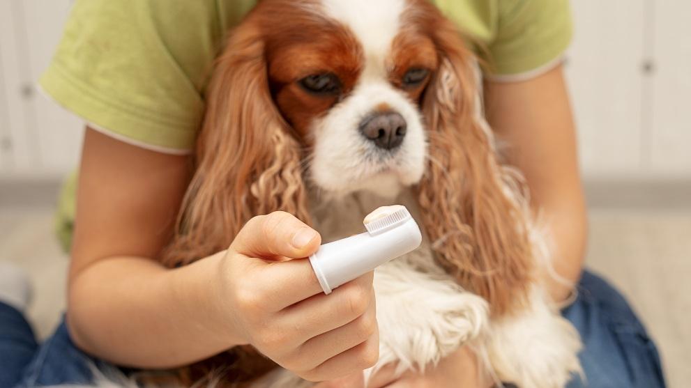 limpieza dientes perro - Las mejores opciones para lavarle los dientes a tu perro