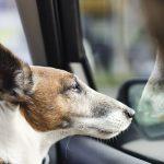llevar perro coche 150x150 - Cómo llevar a un perro en el coche: consejos y recomendaciones