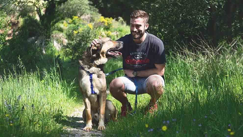 lugares para perros - Los mejores lugares para pasear perros felices