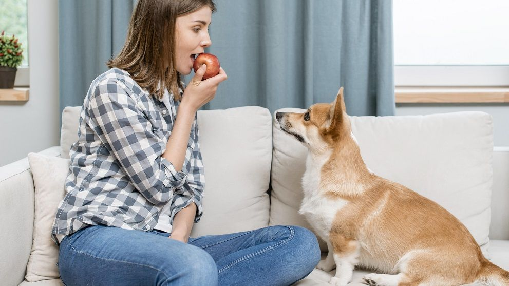 mitos alimentacion canina - 5 Mitos sobre la alimentación de tu perro