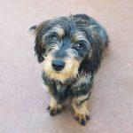 molly 150x150 - Comprar perro mediano