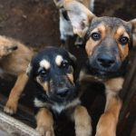motivos adoptar perro 150x150 - 11 razones que demuestran que adoptar un perro es mejor que comprarlo
