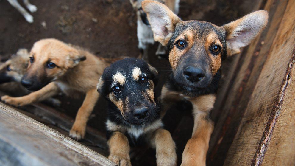 motivos adoptar perro - 11 razones que demuestran que adoptar un perro es mejor que comprarlo