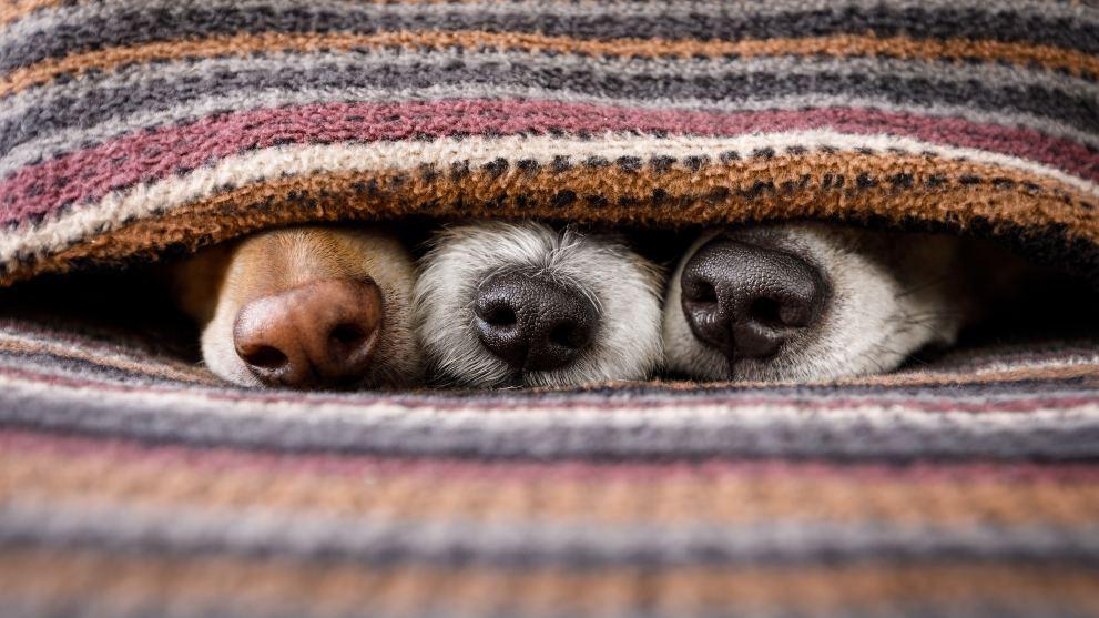 nariz perros - Blog de perros para buenos dueños