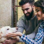 no comprar perro 150x150 - 11 razones que demuestran que adoptar un perro es mejor que comprarlo
