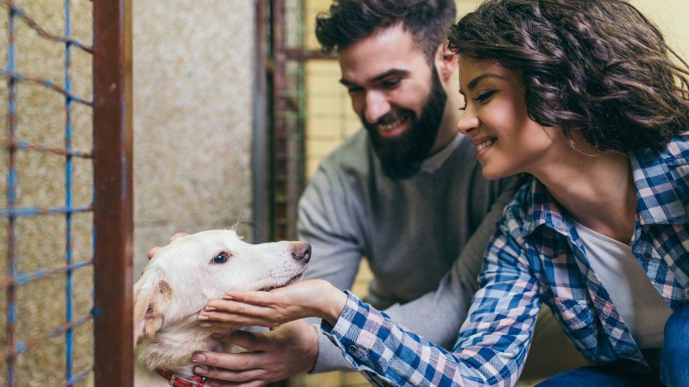 no comprar perro - 11 razones que demuestran que adoptar un perro es mejor que comprarlo