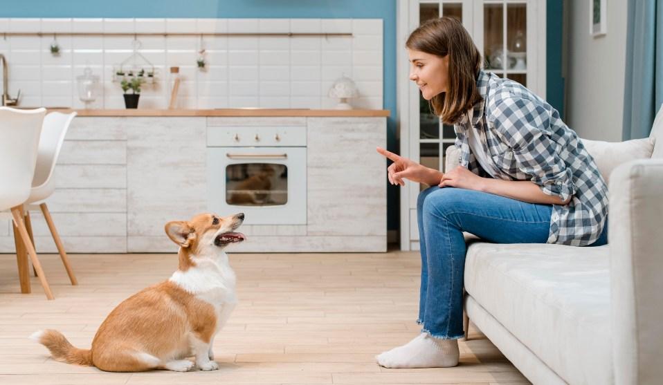 ordenes basicas mascota - Enseña a tu perro a sentarse paso a paso
