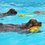 parques acuaticos perros espana 150x150 - Los mejores parques acuáticos para disfrutar con tu perro