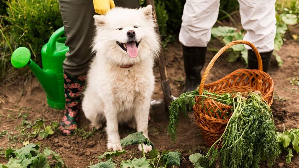 perro dieta vegana - Viaja con tu perro en avión: cómo preparar a tu peludo