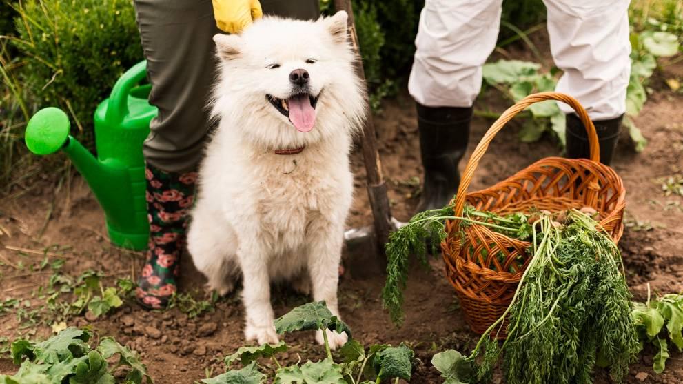 Pautas para dieta vegana en perros