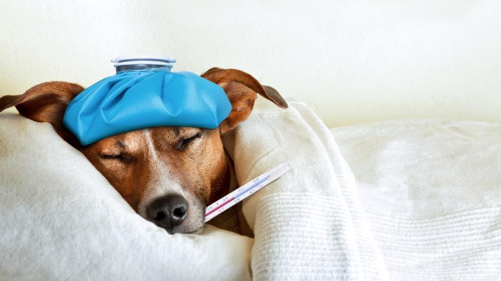 perro dieta - Cómo preparar una dieta blanda para perros