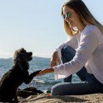 perro mestizo pequeno 150x150 - Adoptar un perro mestizo: 5 Razones que te impresionarán