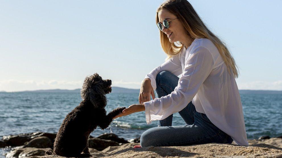 perro mestizo pequeno - Adoptar un perro mestizo: 5 Razones que te impresionarán