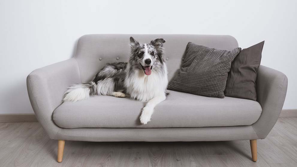 perros inteligentes - Teletrabajo: la oportunidad para disfrutar con tu perro en casa