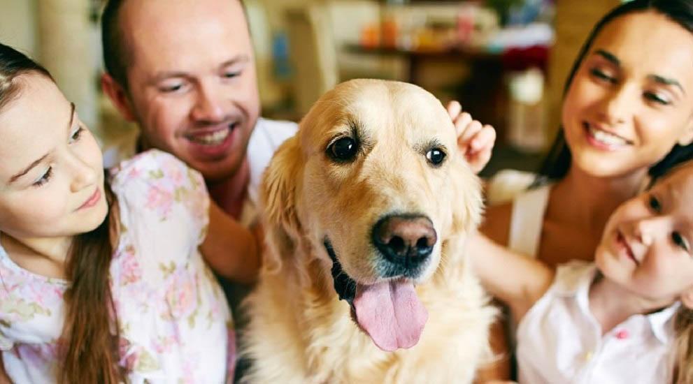 perros para ninos - Blog de perros para buenos dueños