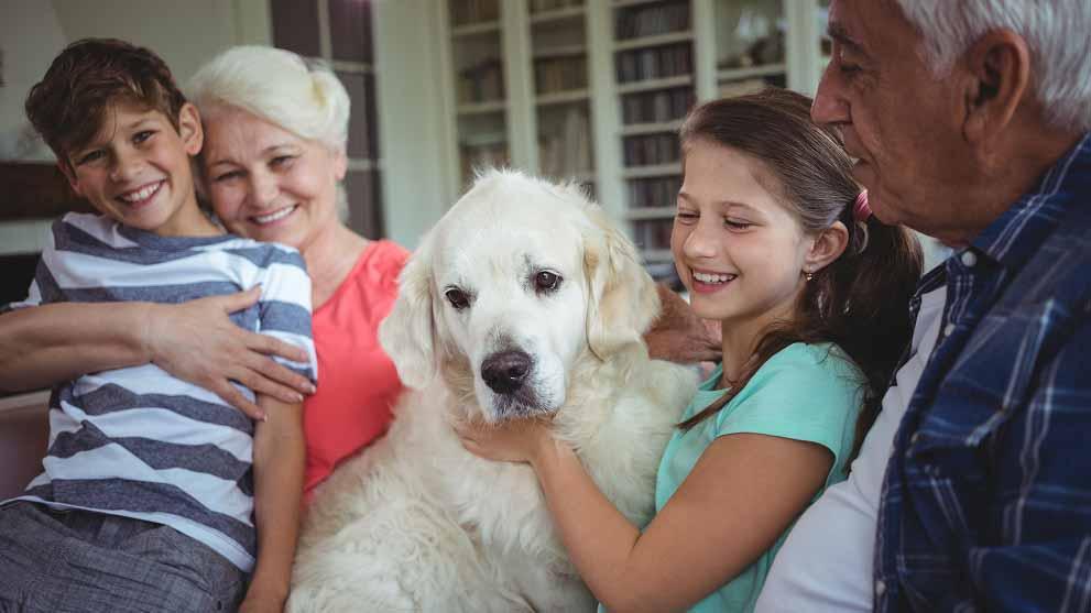 perros para personas mayores - Qué tener en cuenta al elegir un centro de adopción de perros
