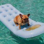 perros parques acuaticos 150x150 - Los mejores parques acuáticos para disfrutar con tu perro