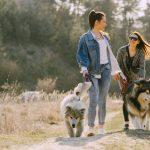 perros paseando correa 150x150 - Cómo conseguir que tu perro no tire de la correa al pasear