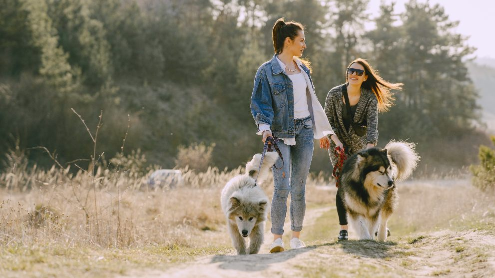 perros paseando correa - Cómo conseguir que tu perro no tire de la correa al pasear