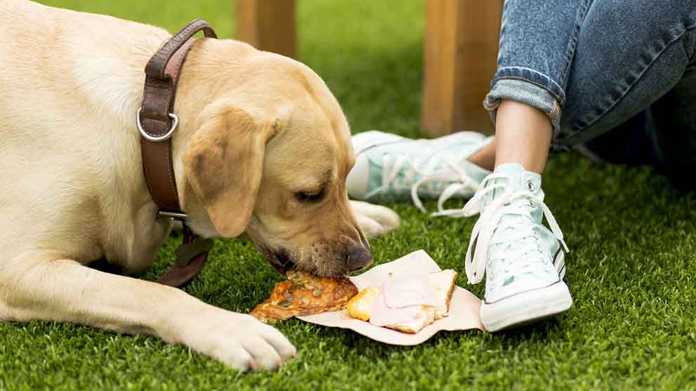 poner a dieta perro - Cómo poner a dieta a tu perro con éxito