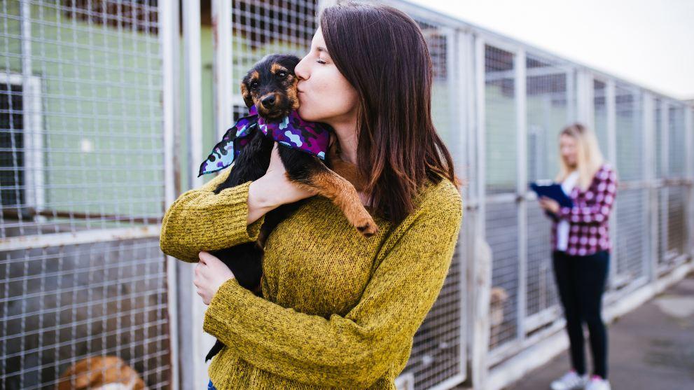 Por qué adoptar un perro