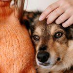 prepara casa perro adoptado 150x150 - Cómo preparar tu casa para la llegada de un perro adoptado
