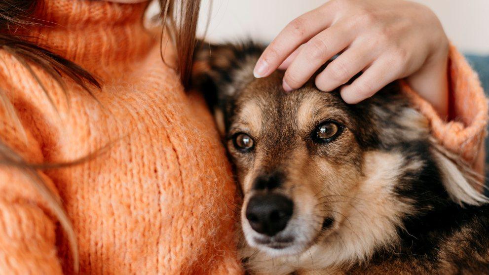 prepara casa perro adoptado - Cómo preparar tu casa para la llegada de un perro adoptado