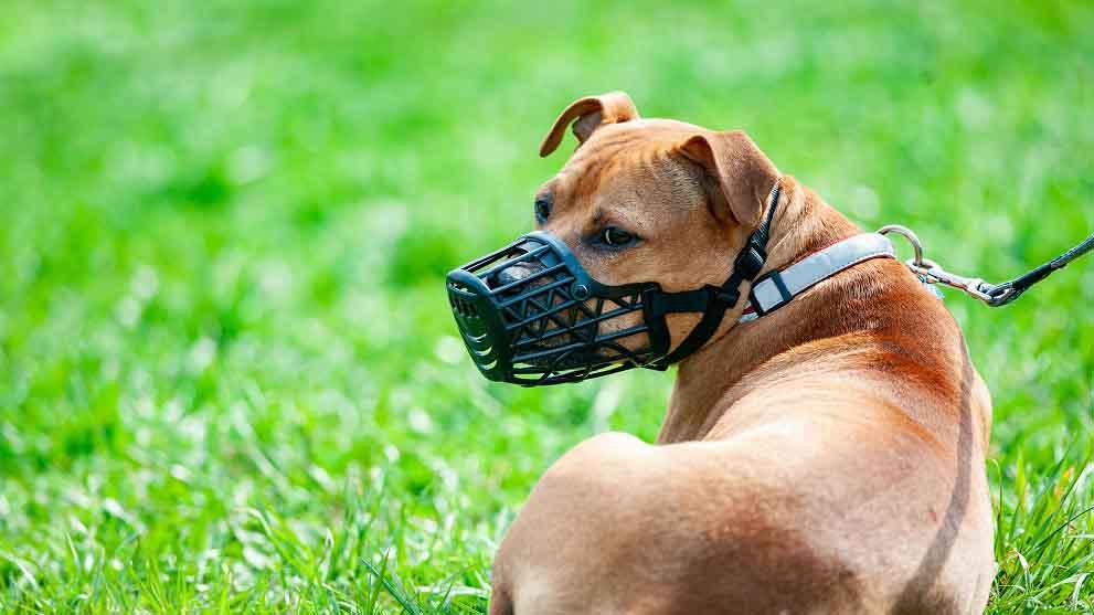 Qué razas de perros deben llevar bozal