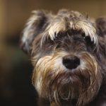 que preguntar guarderia canina 150x150 - Guarderías para perros: ¿valen la pena?