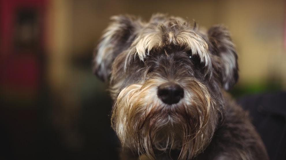 que preguntar guarderia canina - Guarderías para perros: ¿valen la pena?