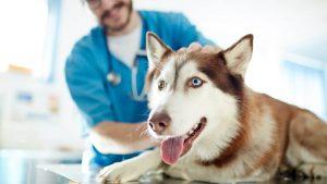 seguro medico perros 300x169 - Refugio Animales Paterna