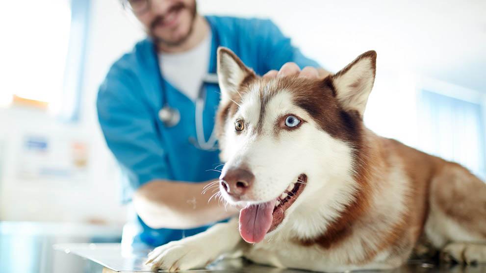 seguro medico perros - ¿Cuál suele ser el comportamiento de un perro adoptado?