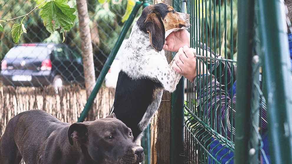 Seguro responsabilidad civil canino