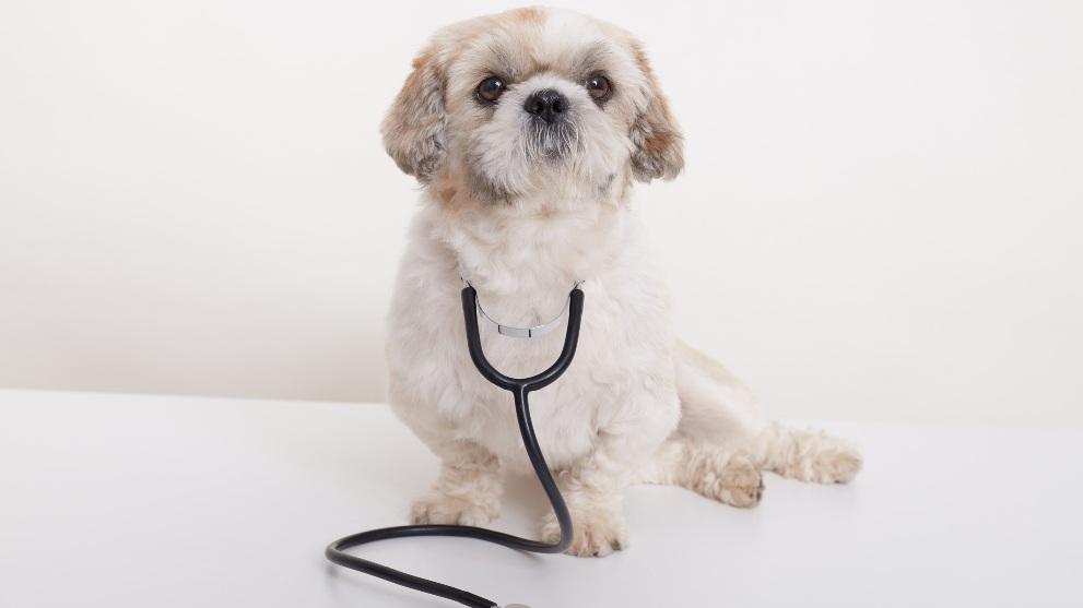 sintomas de la rabia canina - Las señales que indican que tu perro tiene la rabia