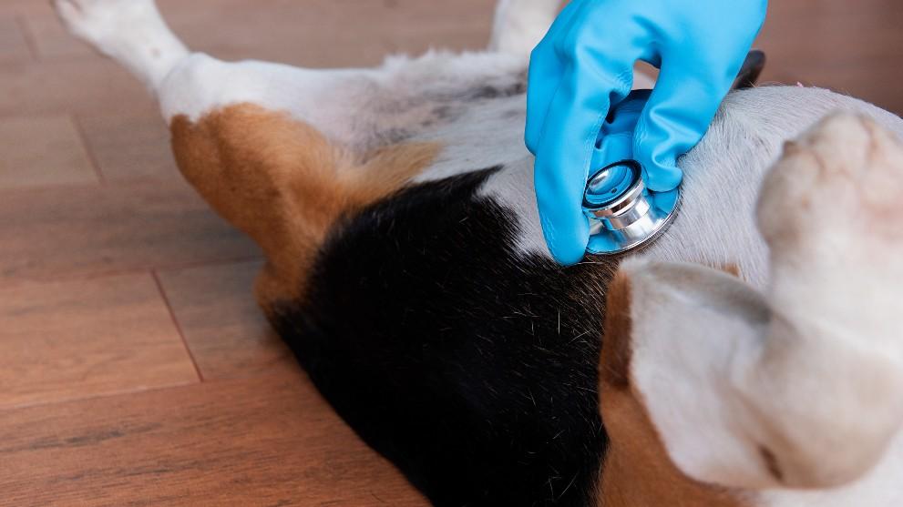 sintomas tos perros - Cómo reconocer la tos de las perreras