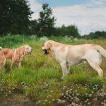 socializacion perros 150x150 - Cómo hacer que tu perro socialice con otros perros