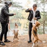 socializar perro 150x150 - Cómo hacer que tu perro socialice con otros perros