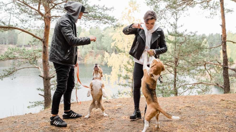 socializar perro - Cómo hacer que tu perro socialice con otros perros