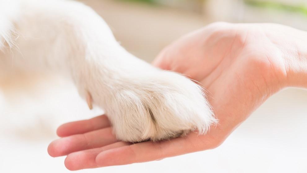 tener perro mestizo - Enfermedades caninas: las razas de perro más vulnerables