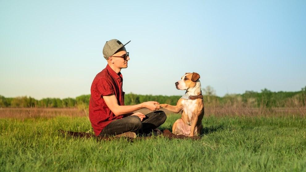 tips perro de pata - Cómo enseñarle a tu perro a dar la pata