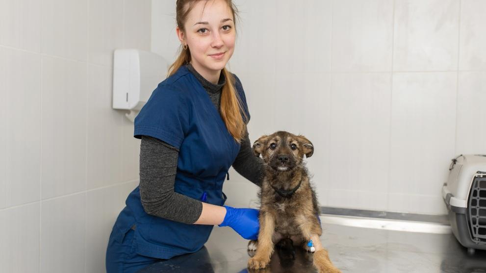 tratemiento tos perrera - Cómo reconocer la tos de las perreras