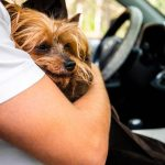 turismo mascota espana 150x150 - 10 mejores lugares para viajar con perro en España este verano