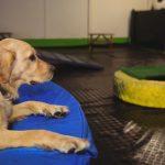 vale pena guarderia canina 150x150 - Guarderías para perros: ¿valen la pena?