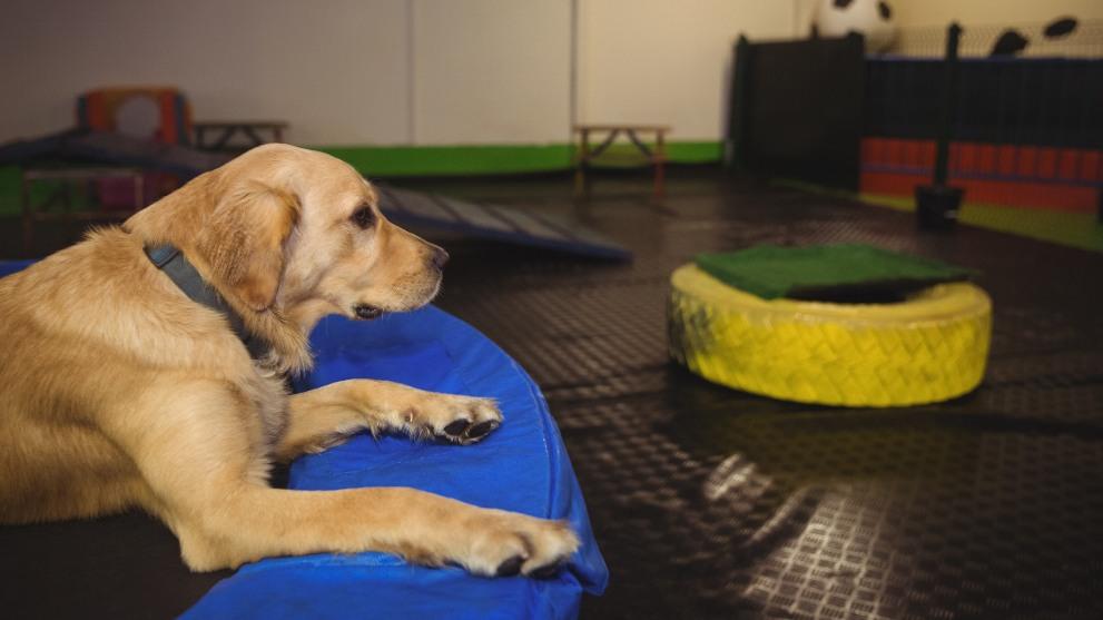 vale pena guarderia canina - Guarderías para perros: ¿valen la pena?