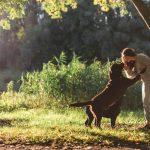 ventajas guarderias perros 150x150 - Guarderías para perros: ¿valen la pena?
