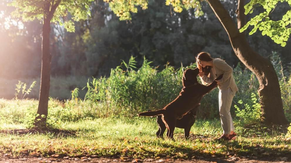 ventajas guarderias perros - Guarderías para perros: ¿valen la pena?