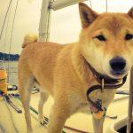 viajar perro barco 150x150 - Consejos para viajar con perro y disfrutar al máximo